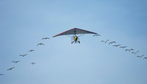 foto-vlieger-2